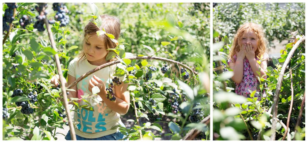 Otway Blueberries, A dietitian and a photographer
