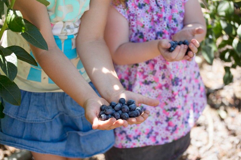 Otway Blueberries